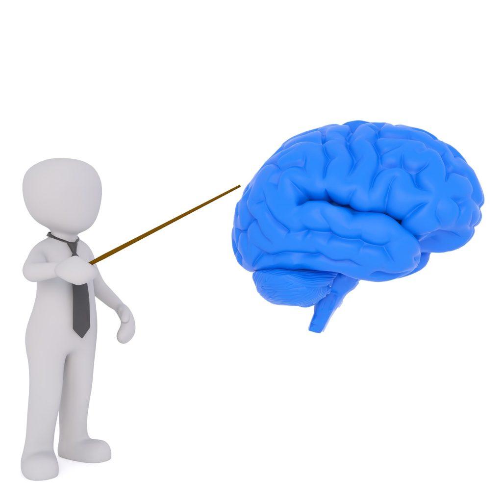脳みそ解説