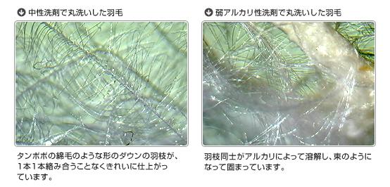 羽毛を洗った比較画像
